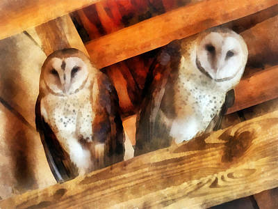 Photograph - Two Barn Owls by Susan Savad