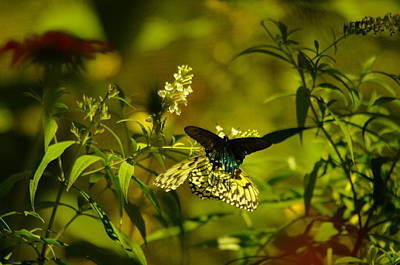 Fluttering Photograph - Two Beautiful Creations by Jeff Swan
