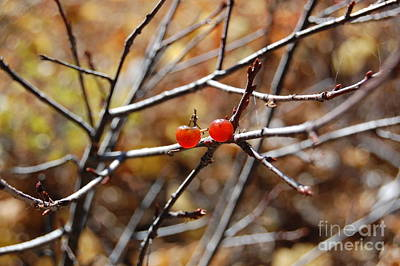 Photograph - Two Berries Left by Debra Thompson