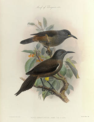 Etc. Photograph - Two Birds Of Hawaii by British Library