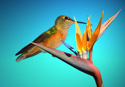 Photograph - Two Birds Of Paradise by Joyce Dickens