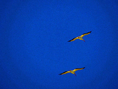 Art Print featuring the photograph Two Blue by Tom DiFrancesca