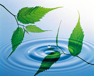Two Branches With Green Leaves Floating Print by Panoramic Images