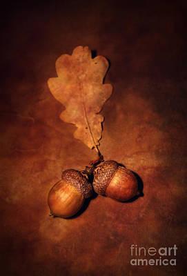 Two Brown Acorns Art Print
