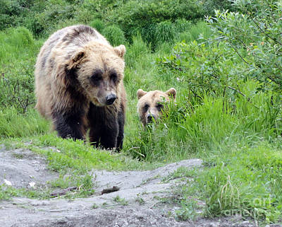 Two Brown Bears Art Print