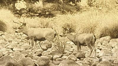 Yosemite Np Photograph - Two Bucks by Scott Cameron