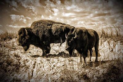 Two Buffalo Art Print