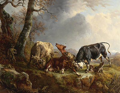 Two Bulls Defend Against A Cow Attacked By Wolves Art Print