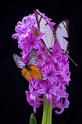 Butterfly Photograph - Two Butterflies by Garry Gay