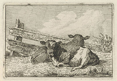 Fence Drawing - Two Calves Lying By A Fence, Anthony Oberman by Artokoloro