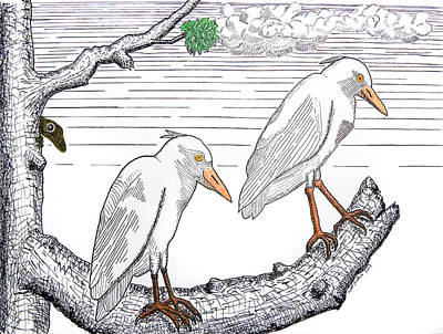 Drawing - Two Cattle Egrets by John Orsbun
