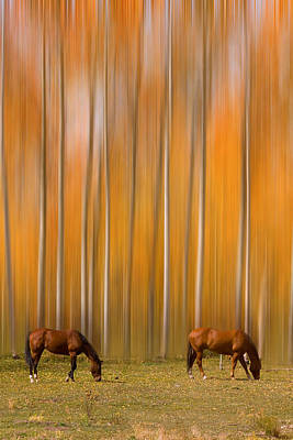 Photograph - Two Colorado High Country Mystic Autumn Horses by James BO  Insogna