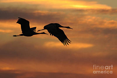 Photograph - Two Cranes At Sunset by Larry Ricker