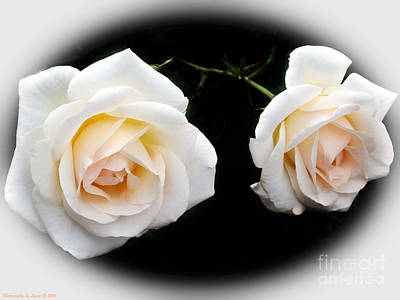 Photograph - Two Cream Roses by Gena Weiser