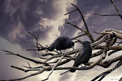 Raven Digital Art - Two Crows by Linda Lees