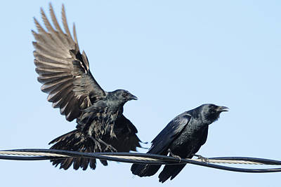 Photograph - Two Crows On A Wire by Bradford Martin