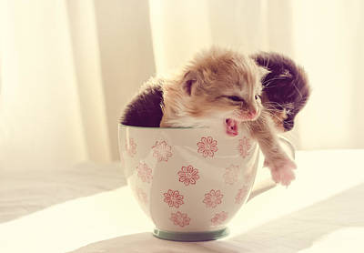 Photograph - Two Cute Kittens In A Cup by Spikey Mouse Photography