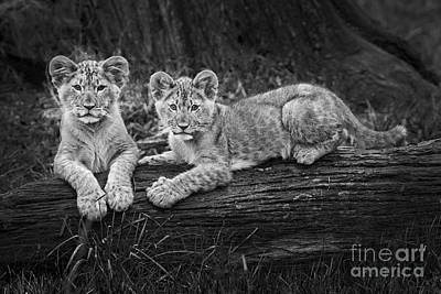 Photograph - Two Cute by Sonya Lang