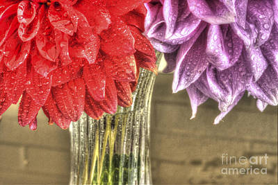 Photograph - Two Dahlias - 0852 by Paul W Faust -  Impressions of Light
