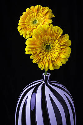 Gerbera Photograph - Two Daises In Striped Vase by Garry Gay