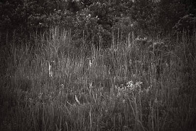Two Deer Hiding Art Print by Bradley R Youngberg