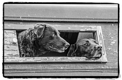 Photograph - Two Dogs by Craig Perry-Ollila
