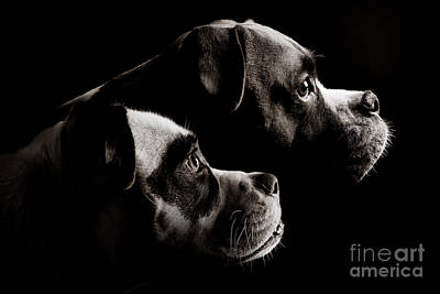 Pitty Photograph - Two Dogs by Jt PhotoDesign