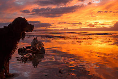 Two Dogs Look Out To Sea During An Amazing Beach Sunset. Art Print