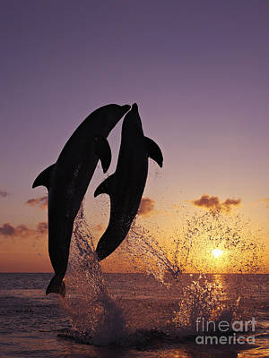 Two Dolphins Jumping Together At Sunset Art Print