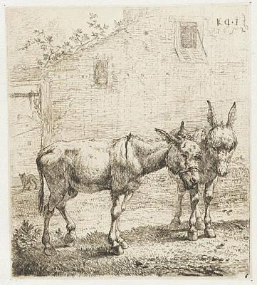 Donkey Drawing - Two Donkeys, Karel Dujardin by Karel Dujardin