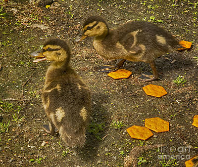 Two Ducklings Original by Ruth H Curtis