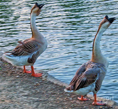 Photograph - Two Ducks Near Blue Water by Gregory Dyer