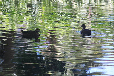 Wall Art - Photograph - Two Ducks On A Pond by Sara Ricer