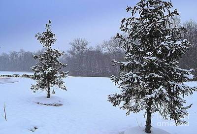 Indiana Photograph - Two Evergreen Trees In Snow by Amy Lucid