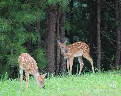 Photograph - Two Fawns by Jackie Farnsworth