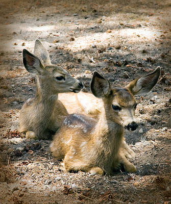 Photograph - Two Fawns by Melinda Fawver