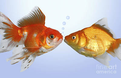 Kisses Digital Art - Two Fish Kissing Fs502 by Greg Cuddiford