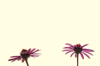 Digital Art - Two Flowers by Susan Stone