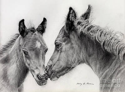 Black And White Drawings Drawing - Two Foals by Hailey E Herrera