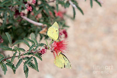 Crush Creations Photograph - Two For Tea And Nectar by Crush Creations
