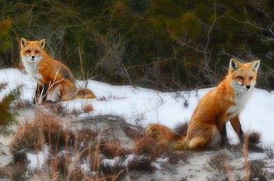 Photograph - Two Foxes by Beth Sawickie