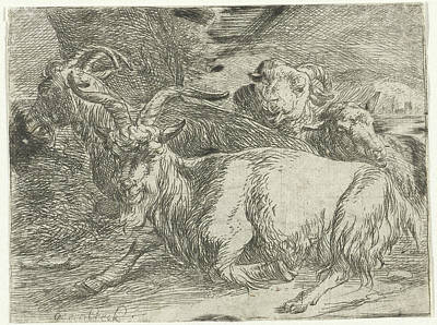Goat Drawing - Two Goats And Two Sheep, Jan Van Ossenbeeck by Jan Van Ossenbeeck