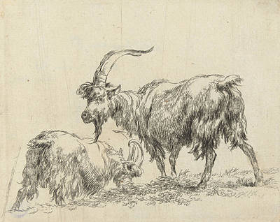 Goat Drawing - Two Goats Or Goats by Nicolaes Pietersz. Berchem