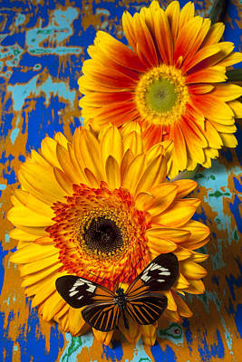 Two Golden Mums With Butterfly Art Print by Garry Gay