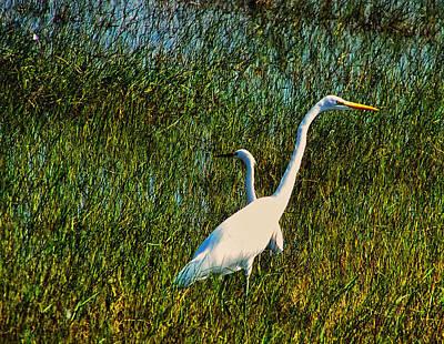 Great White Egret Digital Art - Two Great White Egrets In Bracken by Chris Flees
