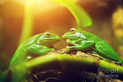 Kiss Photograph - Two Green Frogs Sitting On Leaf Looking On Each Other by Michal Bednarek