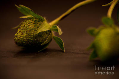 Two Green Strawberries Art Print by Patricia Bainter