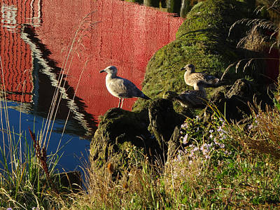 Photograph - Two Gulls Watching by Jacqueline  DiAnne Wasson