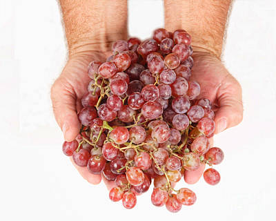 Photograph - Two Handfuls Of Red Grapes by James BO Insogna