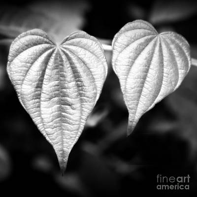 Photograph - Two Hearts by Chris Scroggins